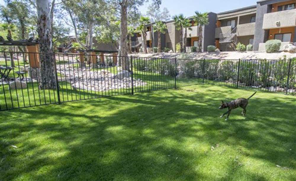 Palm-Canyon-Apartments-Tucson-AZ-Pet-Friendly-Unilodgers